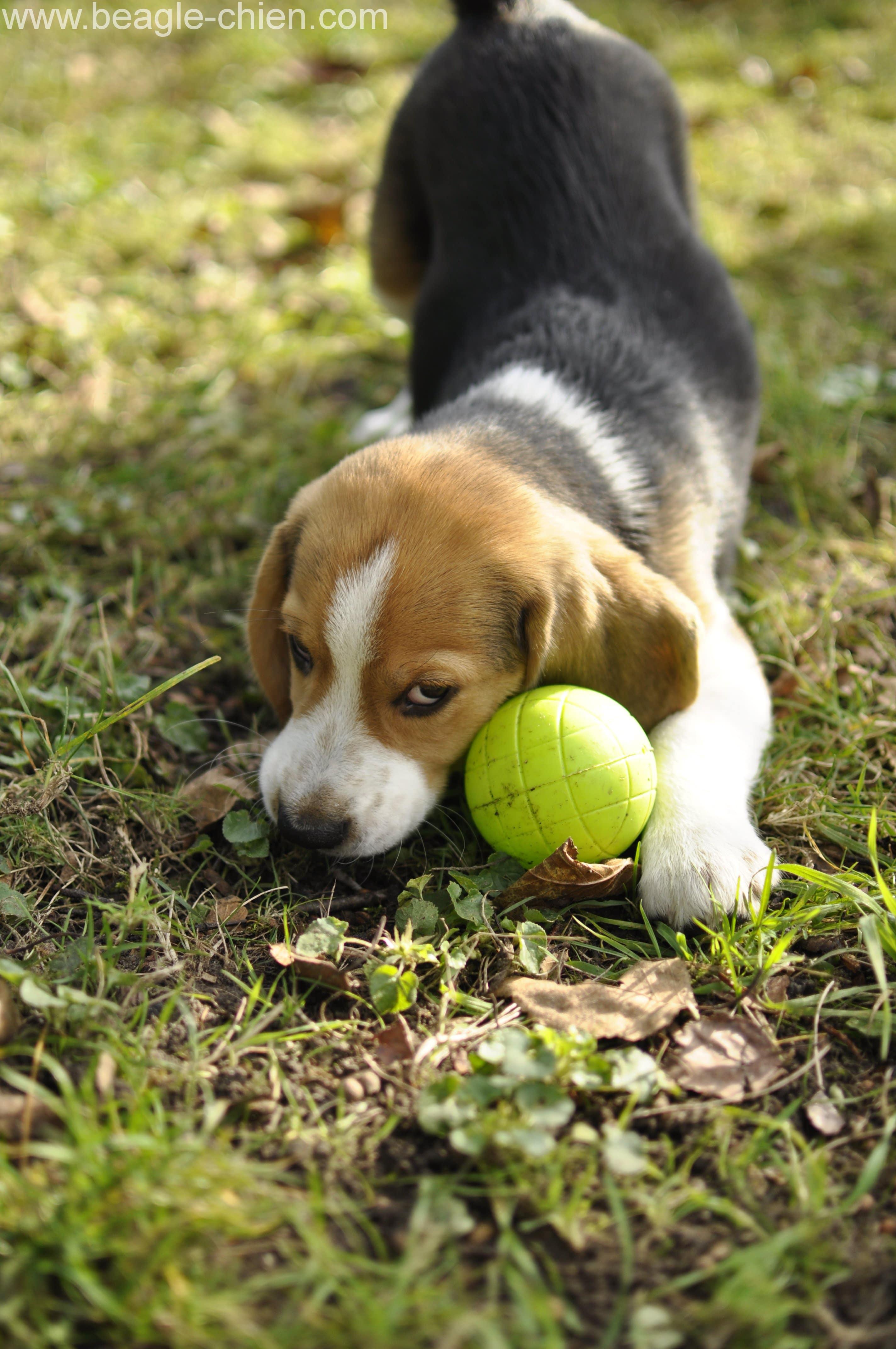 site de rencontres coquines rencontre chien adulte chiot