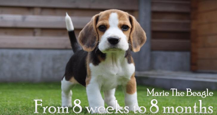 Il filme sa chienne de ses 8 semaines à ses 8 mois