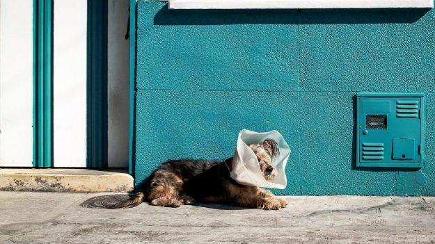 Comment choisir une assurance chien?