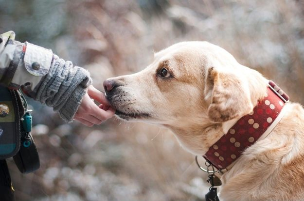 Croquette de qualitée donnée a un chien