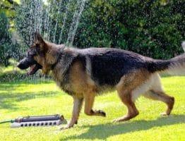 5 conseils pour transformer son chien en chien de garde