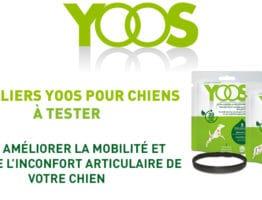 Devenez testeur des colliers YOOS pour chiens!