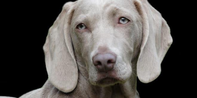 Les assurances santé pour animaux de compagnie se multiplient