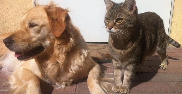 Echantillons gratuits de croquettes Kalina pour chien et chat