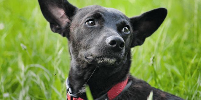 Comment fonctionne un collier GPS pour chien?