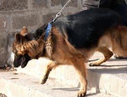 Comment bien choisir la laisse de son chien?