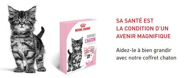 Un coffret pour chatons à recevoir gratuitement