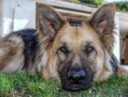 Tout savoir sur les tiques et puces qui menacent vos animaux