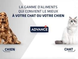 1000 packs Advance pour chiens et chats à tester gratuitement sur theinsidersnet.com !