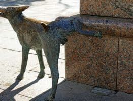 Incontinence urinaire chez le Beagle et le chien