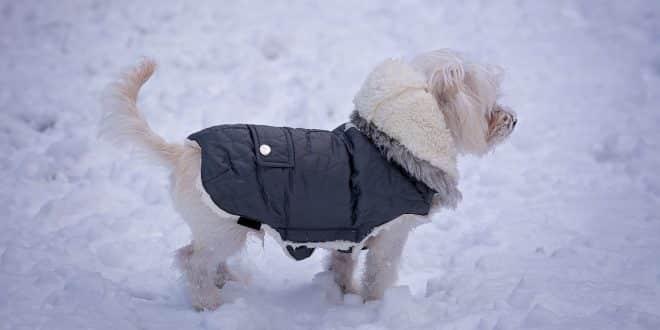 Bien-être : acheter un manteau d'hiver pour son chien