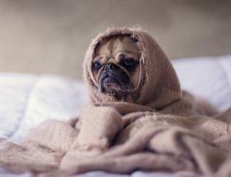Où trouver des produits pour chien à Paris ?
