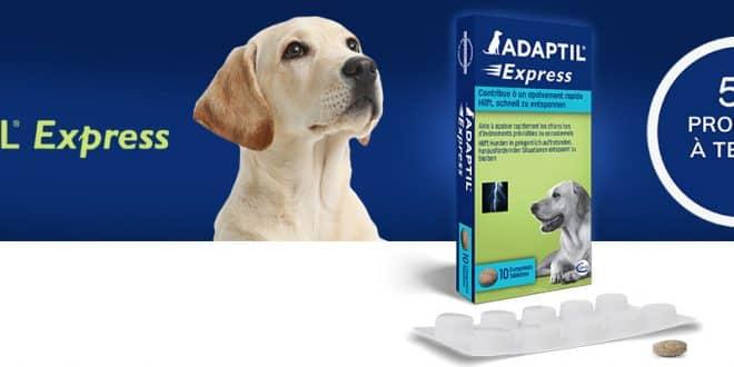 50 compléments alimentaire ADAPTIL Express pour chiens à tester sur consoanimo.com
