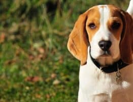Y a t-il une limite d'âge pour prendre une assurance pour son chien ?