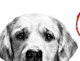 Un sac à dos Royal Canin à récupérer sur offres.royalcanin.fr