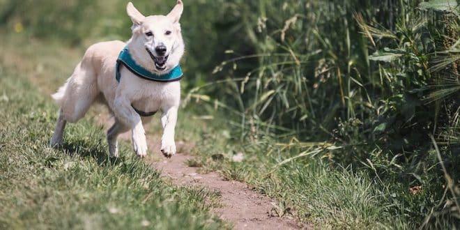 Sortir son chien : combien de fois par jour ?