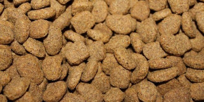 Les ingrédients d'une croquette de qualité pour les chiens