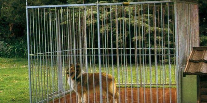 Pourquoi s'équiper d'un parc pour chien ?