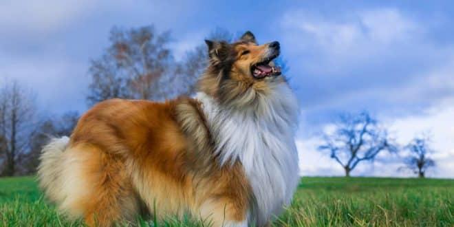 Comment entretenir le poil de son chien après l'hiver ?