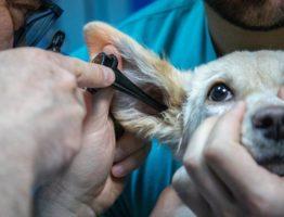 L'importance de l'agencement et l'aménagement de clinique vétérinaire